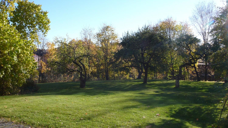 Haven vår. Midt i byen